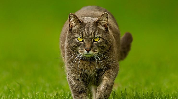 odstraszanie kotów